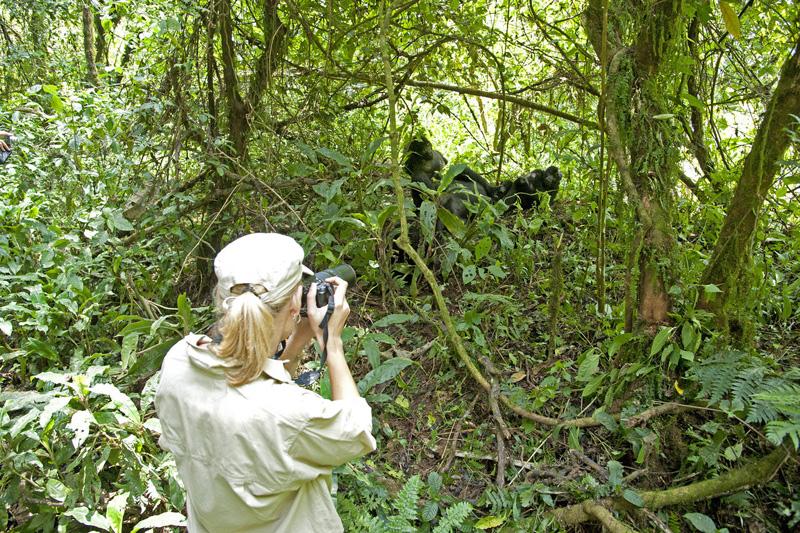 Sanctuary Gorilla Forest Camp Trekking