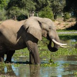 An Incredible African Safari to Kruger, Lower Zambezi and Moremi – Client Feedback