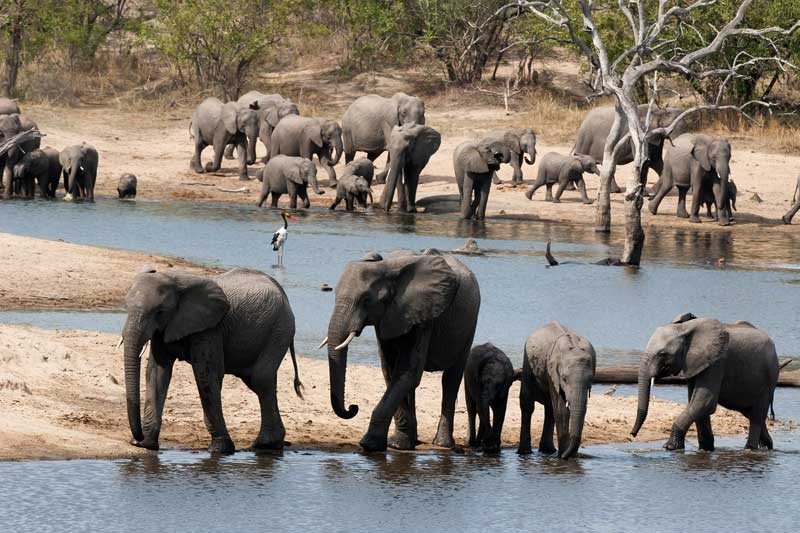 Ulusaba Elephants Waterhole