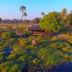 Okavango Delta is Paradise for Hippo Lovers