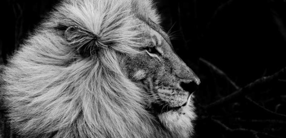 Em Gatland Wows Us with Her Black & White Wildlife Images