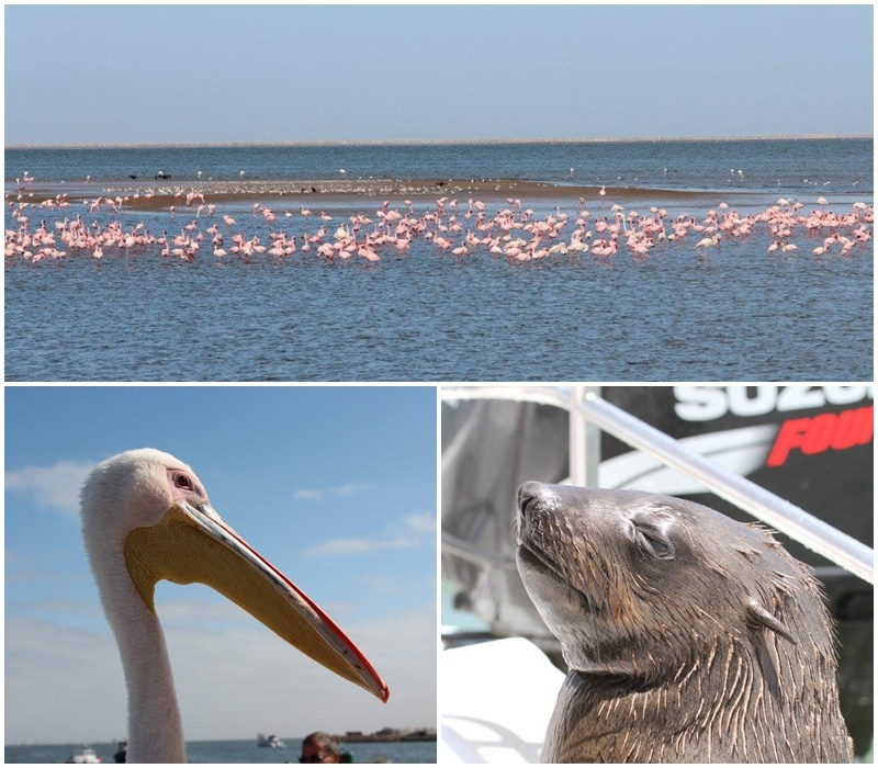Flamingos and other wildlife at Walvis Bay and Swakopmund