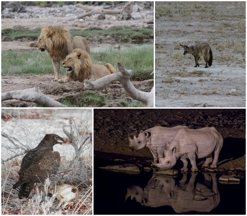 Amazing wildlife and raptor sightings at Etosha Pan