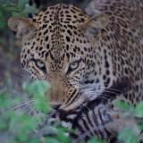 Great Visit to Kruger – Client Feedback