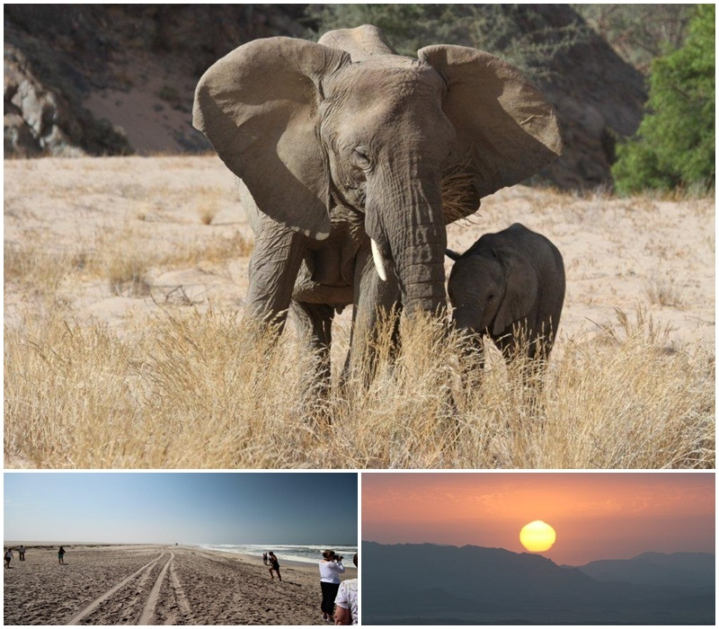 Skeleton coast and elephants at Mowani