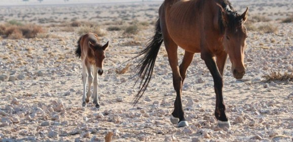 Namibia Self Drive Adventure! Client Feedback