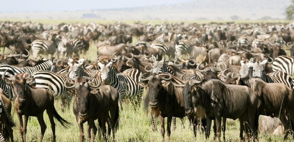 The Lowdown of the Serengeti Migration