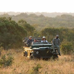 Will Thornybush Game Reserve Drops its Timbavati Boundary Fence?