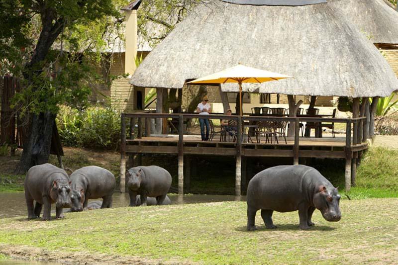 Arathusa Safari Lodge Lawns