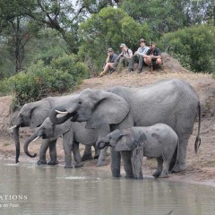 Client Feedback : Wonderful Walks with Africa on Foot