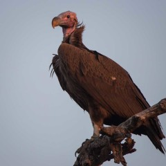 Top 3 Unfortunate Looking Birds to Spot While on Safari