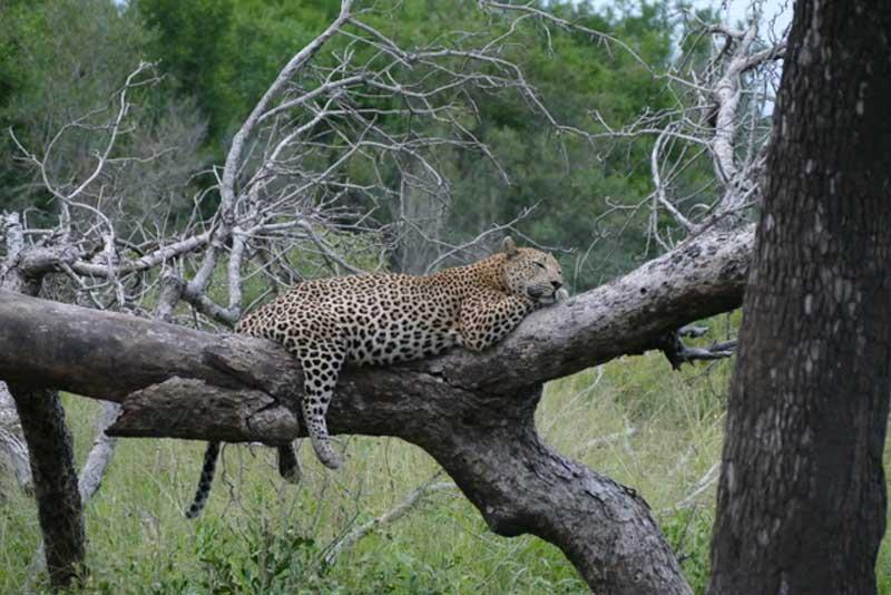Client Feedback : Big 5 Family Safari in Kruger | Sun Safaris