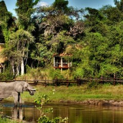 Client Feedback : An In-depth Review of a Kruger and Botswana Safari!