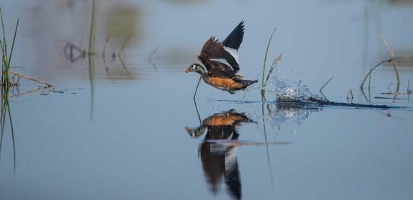 Selinda Spillway: A Birdwatcher's Secret Garden