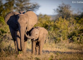 500 Elephants Translocated in Malawi