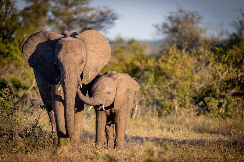 Elephant Calf - Em Gatland