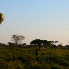 Client Feedback : Luxury Tanzania Migration Safari