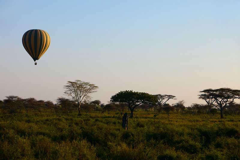 Serengeti Serena Safari