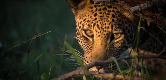 SafariLive : A Virtual Safari in Masai Mara and Kruger