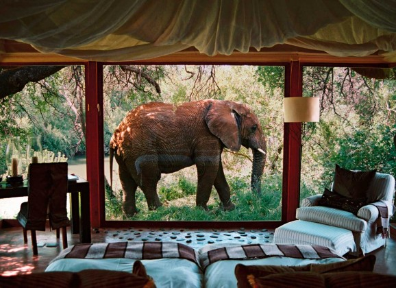 4 Top Notch Lodges in Madikwe Game Reserve