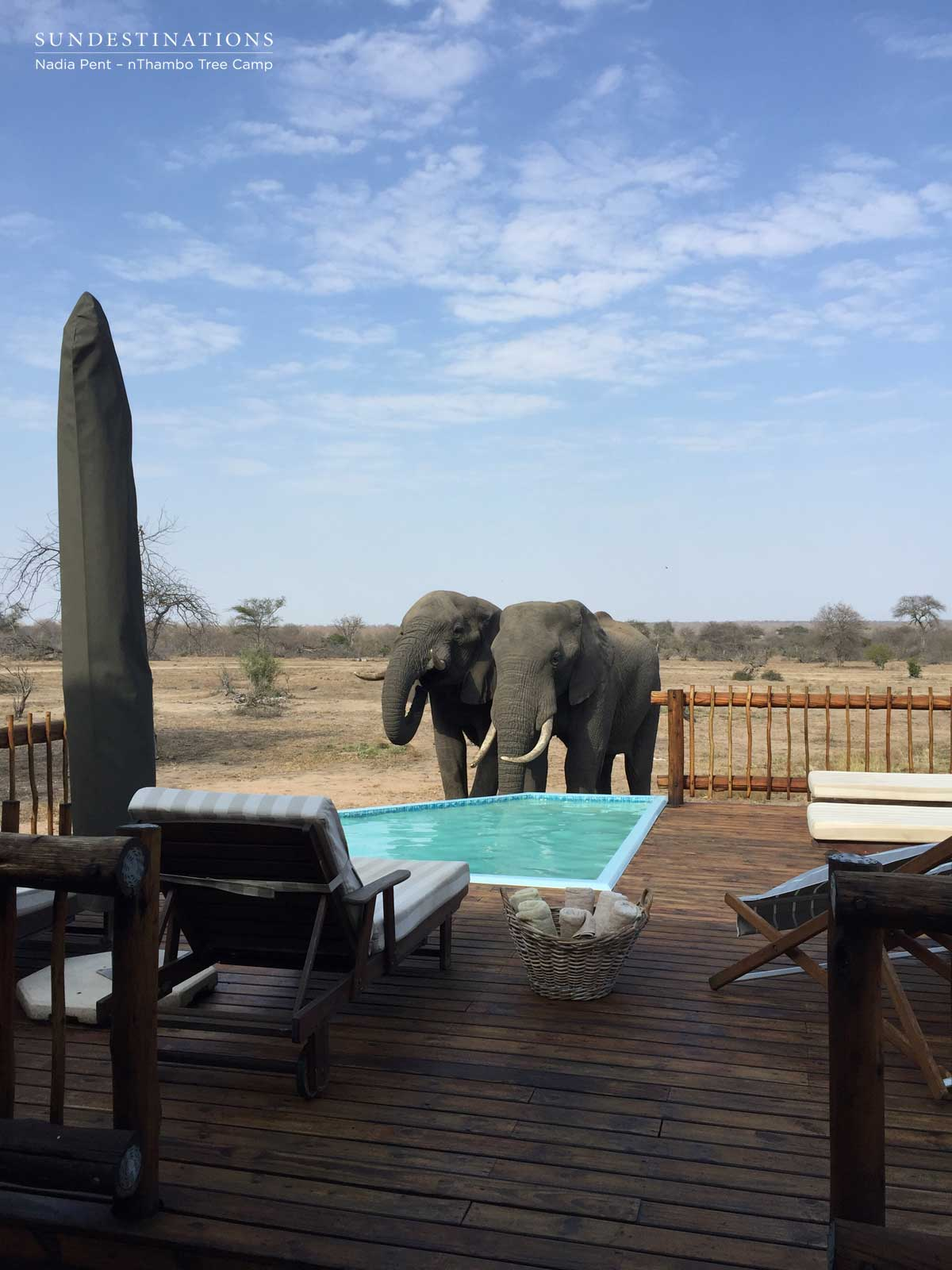 nThambo Tree Camp Elephant at Pool