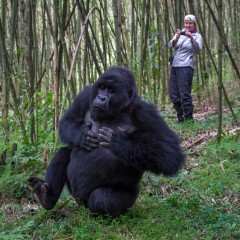 Discover Rwanda at Wilderness Safaris' New Bisate Lodge