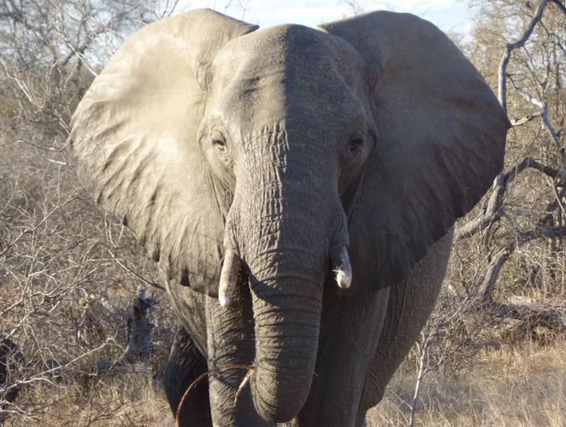 Client Feedback Elephant