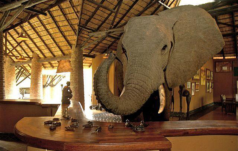 Mfuwe Lodge: Elephants Walk Through Reception During October