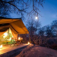 Client Feedback : Botswana Safari and Cape Town Highlights
