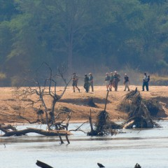Reset in Untouched Nature at Mwaleshi Camp, North Luangwa