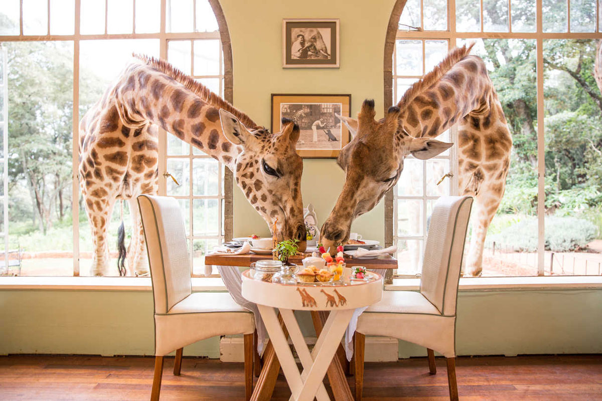https://www.sunsafaris.com/blog/wp-content/uploads/2017/10/GiraffeManorKenya2.jpg