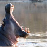 Guest Photos from a Greater Kruger Safari Experience