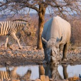 Ongava Private Game Reserve – Your Exclusive Etosha Experience