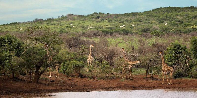 Thanda Tented Camp Wildlife