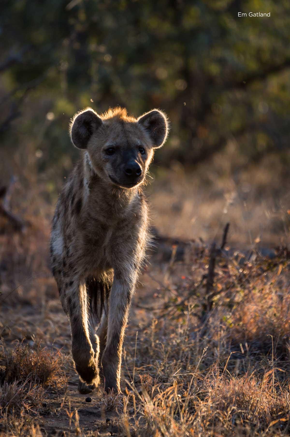 Hyena Bushveld