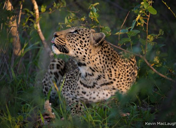 A Photographic Journey through Big Cat Territory