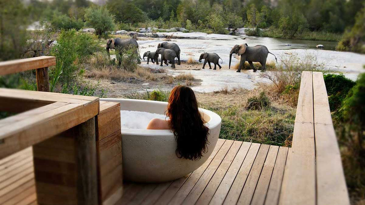 Safari Splendour at Londolozi Private Game Reserve in Sabi Sand