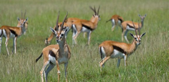Meet the Olympic Athletes of the Safari World