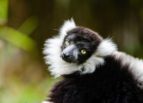 Exploring the Eighth Continent: Madagascar