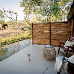 Let a Safari Be Your Language of Love on Valentine's Day