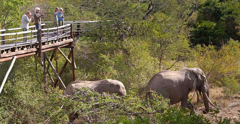 Ezulwini Elephants Skywalk
