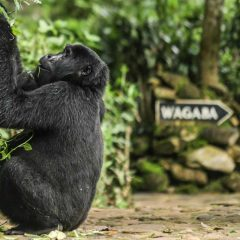 9 Different Safari Spots in 8 Different Countries