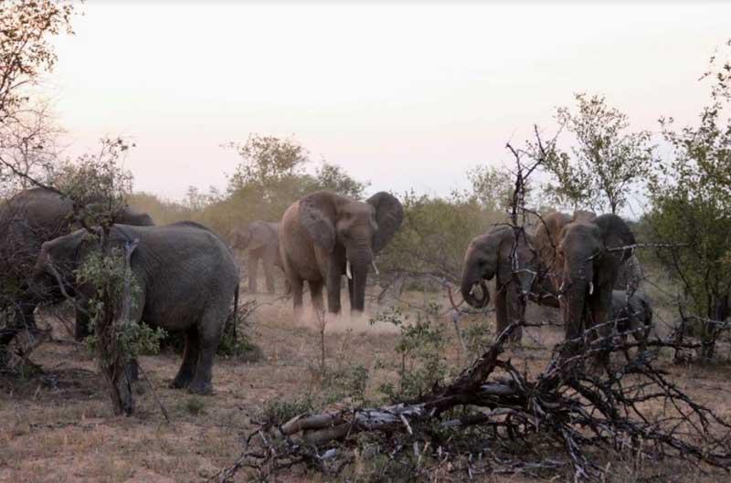 nThambo Elephant Herds