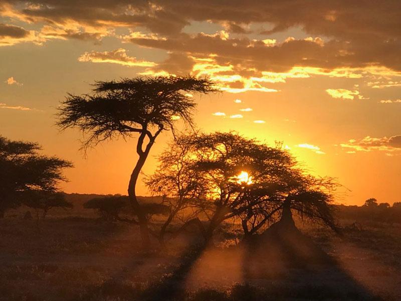 Sunset Safari Style