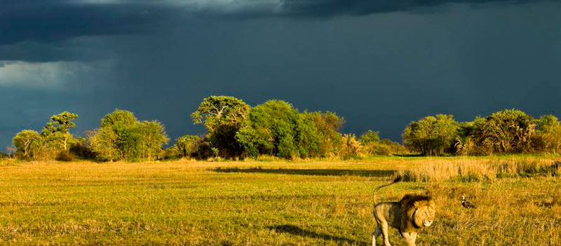 Kafue National Park Stormy Skies
