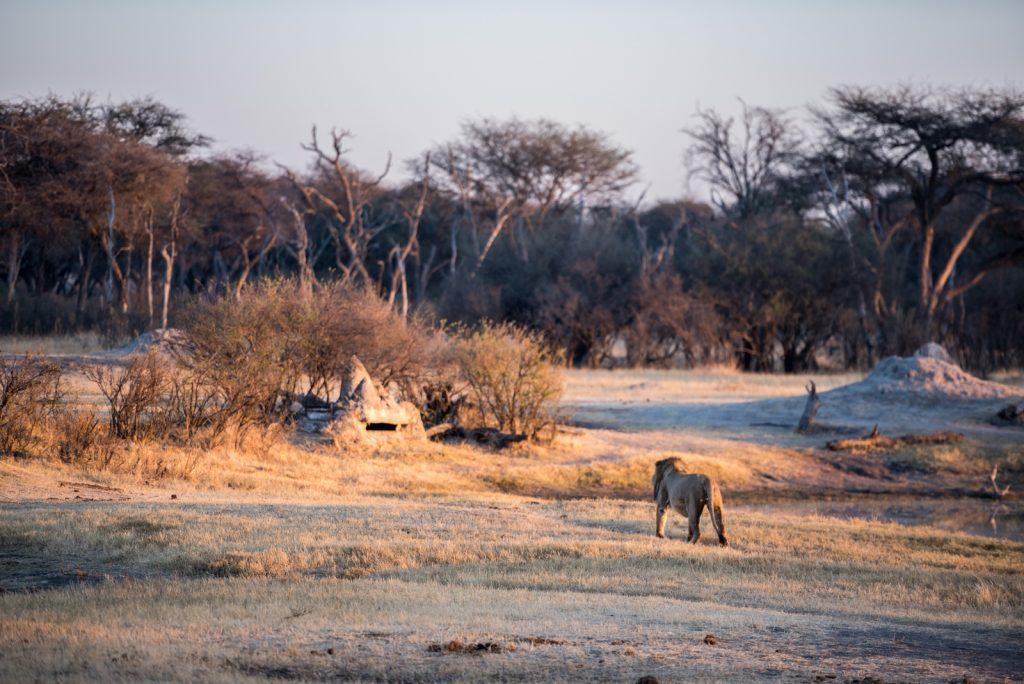 The Hide, Hwange National Park