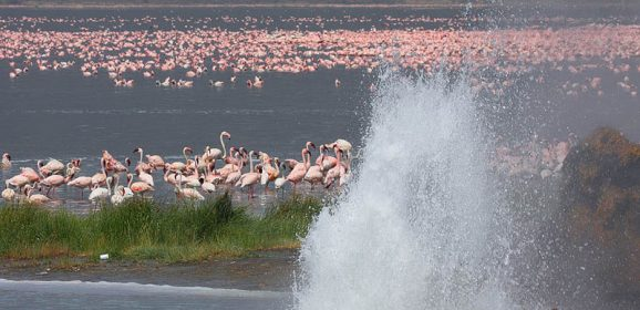 Lake Bogoria in Kenya is Pink Because of its Flamingo Population