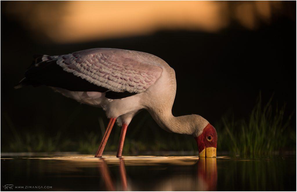 Zimanga Game Reserve © Charl Senekal