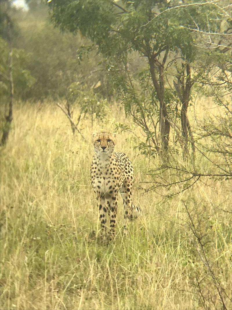 Cheetah Client Feedback