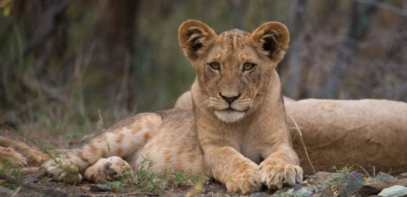 5 Facts About Africa's Big 5 Animals